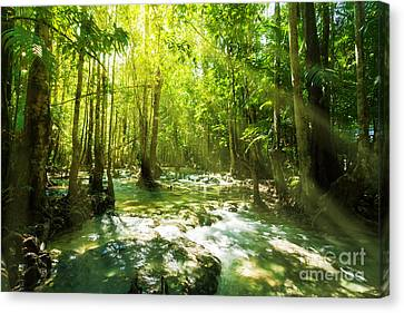 Mangrove Forest Canvas Print - Waterfall In Rainforest by Atiketta Sangasaeng