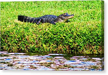 Waters Edge Canvas Print by Marty Gayler