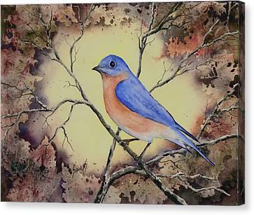 Western Bluebird Canvas Print by Sam Sidders