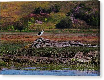 Western Gulls Nesting In A Log Canvas Print