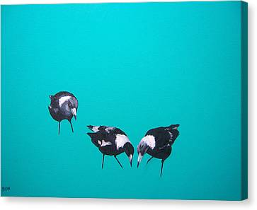Magpies Canvas Print - What About Me by Jan Matson
