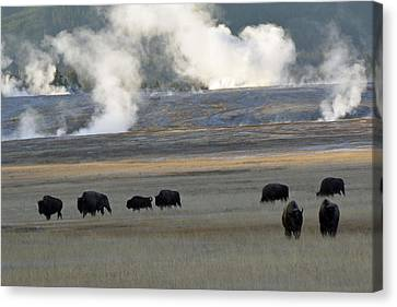 Where The Buffalo Roam Canvas Print by Bruce Gourley