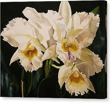 White Cattleya Orchids Canvas Print