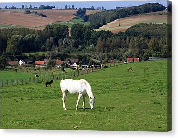 Horse Stable Canvas Print - White Horse In Landscape by Aidan Moran