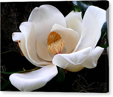 Canvas Print featuring the photograph White Magnolia by Yolanda Rodriguez