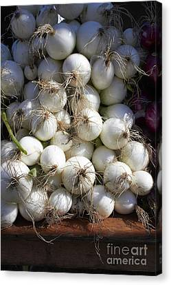 White Onions Canvas Print by Tony Cordoza