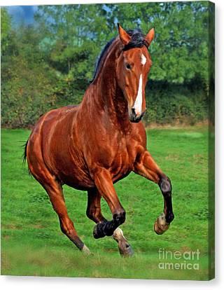 Bay Horse Canvas Print - Wild At Heart by Angel  Tarantella
