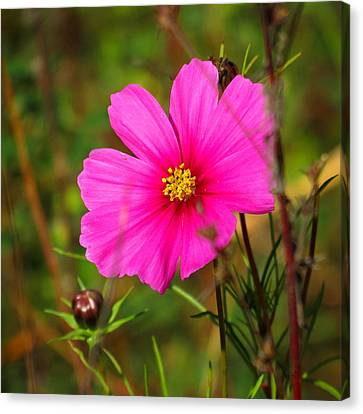Canvas Print featuring the photograph Wild Flower by Eric Switzer