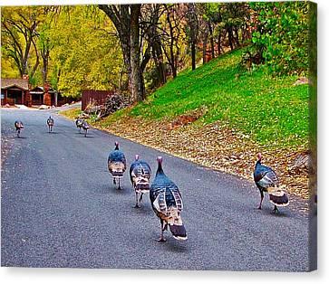 Wild Turkey Parade In Zion National Park-utah   Canvas Print