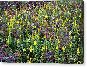 Wildflower Meadow Canvas Print by John Greim