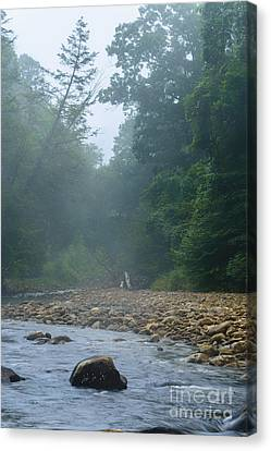Williams River Summer Mist Canvas Print by Thomas R Fletcher