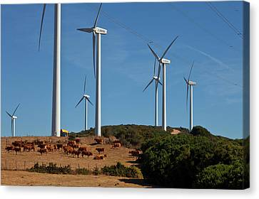 Wind Generators Or Windmills Canvas Print by Panoramic Images