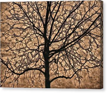 Windowpane Tree In Autumn Canvas Print by Carol Leigh