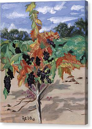 Wine Country Canvas Print by Reba Baptist