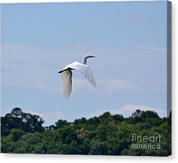 Canvas Print featuring the photograph Wings II by Carol  Bradley