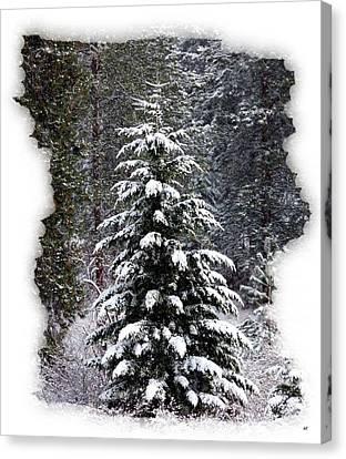 Fir Trees Canvas Print - Winter Calm by Will Borden