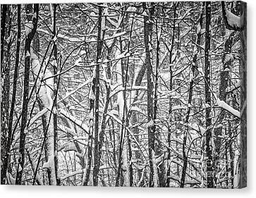 Winter Forest Abstract Canvas Print by Elena Elisseeva