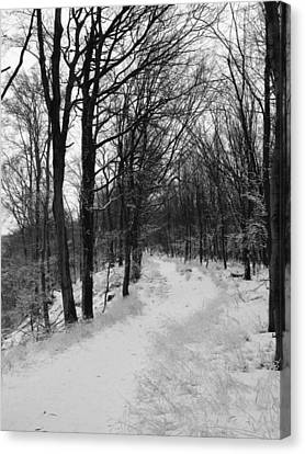 Winter Forest Canvas Print by Eva Csilla Horvath