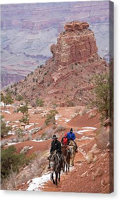 Winter Mule Train In The Grand Canyon Canvas Print by Jim West