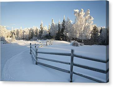 Winter Scenic Of Split Rail Fence And Canvas Print