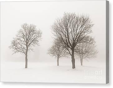 Winter Trees In Fog Canvas Print by Elena Elisseeva