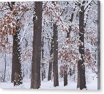 Winter Trees Canvas Print by Larry Bohlin