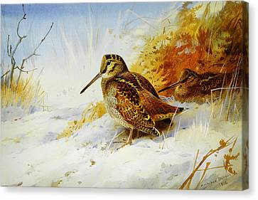 Winter Woodcock  Canvas Print by Celestial Images