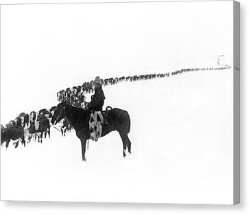 Wintertime Cattle Drive Canvas Print by Charles Belden