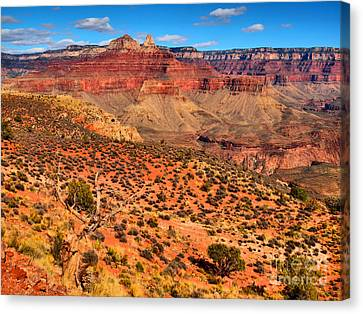 Within The Canyon Canvas Print by Tara Turner