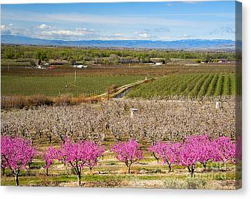 Yakima Valley Spring Canvas Print by Mike  Dawson