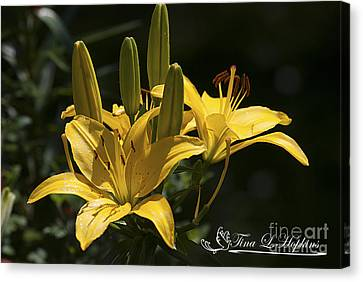 Canvas Print featuring the photograph Yellow Day Lily 20120615_43a by Tina Hopkins