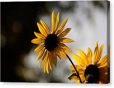 Yellow Flower Canvas Print by Gloria Pasko