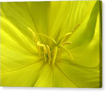 Canvas Print - Yellow Flower by Robert Lozen