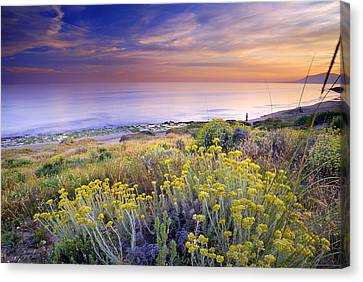 Yellow Flowers At The Sea Canvas Print by Guido Montanes Castillo