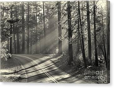Yosemite Sunlight Canvas Print by Jane Rix