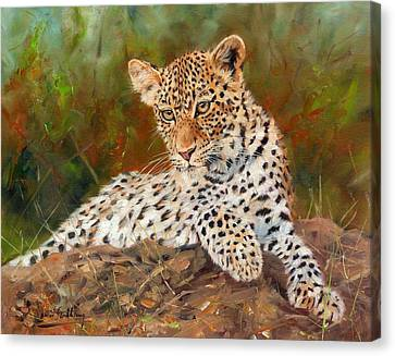 Young Leopard Canvas Print by David Stribbling
