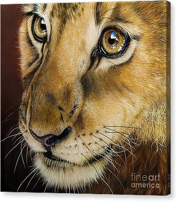Young Lion Canvas Print by Jurek Zamoyski