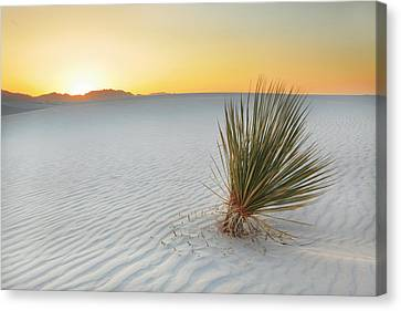 Yucca Plant At White Sands Canvas Print