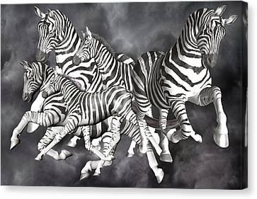 Storm Canvas Print - Zebras  by Betsy Knapp