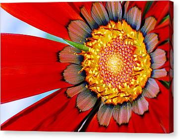 Canvas Print featuring the photograph Zinnia In Red by Wendy Wilton
