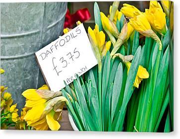 Daffodils Canvas Print by Tom Gowanlock