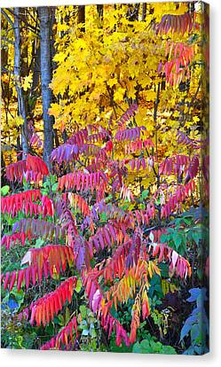 Devil's Lake Fall Color Canvas Print by Ray Mathis