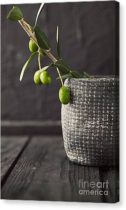 Fresh Olives  Canvas Print