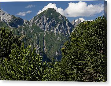 Huerquehue National Park, Chile Canvas Print by Scott T. Smith