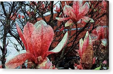 Magnolia Flowers  Canvas Print