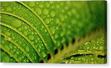 Raindrops Canvas Print by Werner Lehmann
