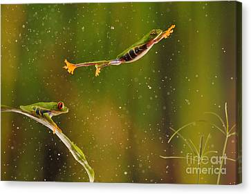Red-eyed Tree Frog Canvas Print by Scott Linstead