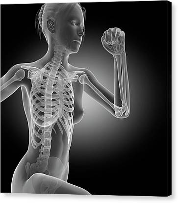 Skeletal System Of Jogger Canvas Print by Sebastian Kaulitzki
