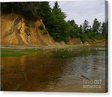 Sunset Bay State Park Canvas Print by Gail Peters