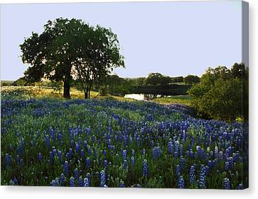 Canvas Print featuring the photograph 10 by Susan Rovira